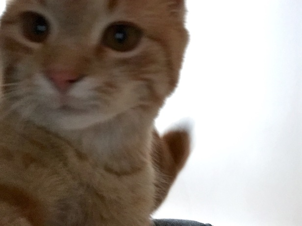 Posercat