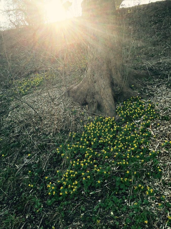 Flowers_Spring.jpg