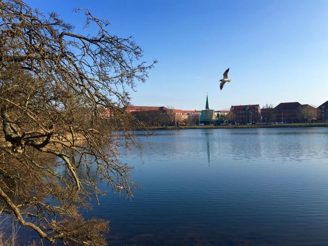 view_bird