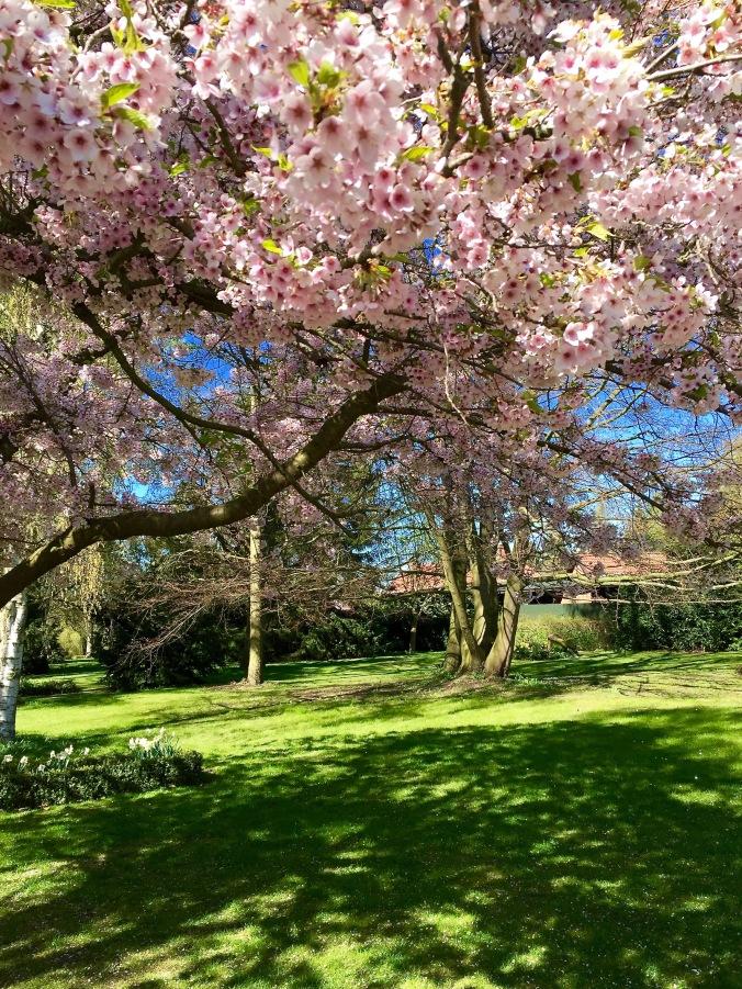 Blossoms_tree