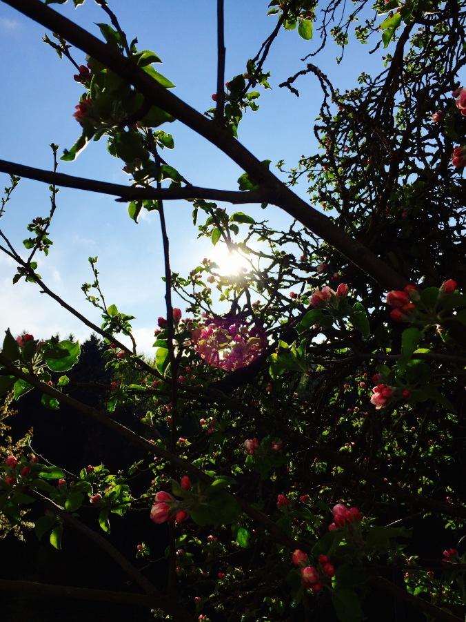 Flowers_nature_tree_light