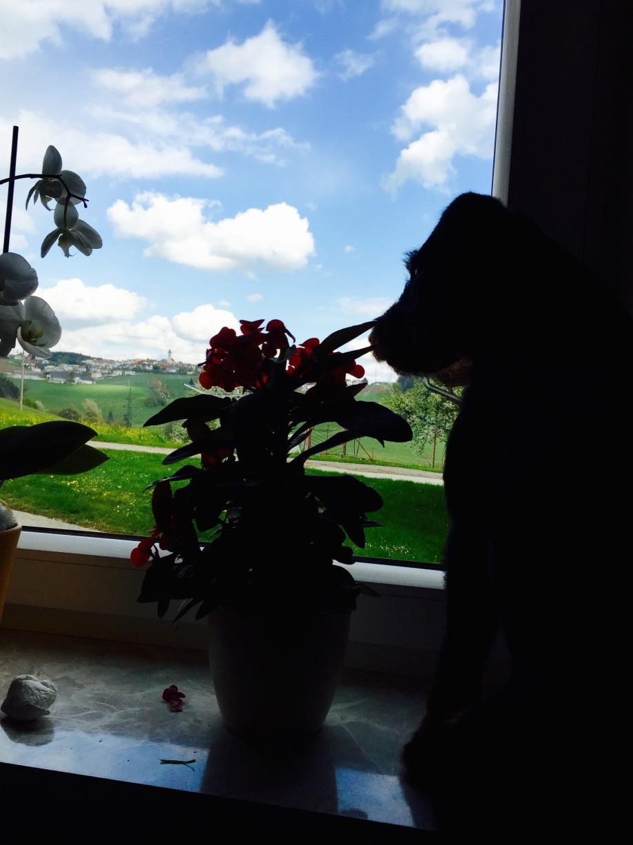 Home_dog_outside