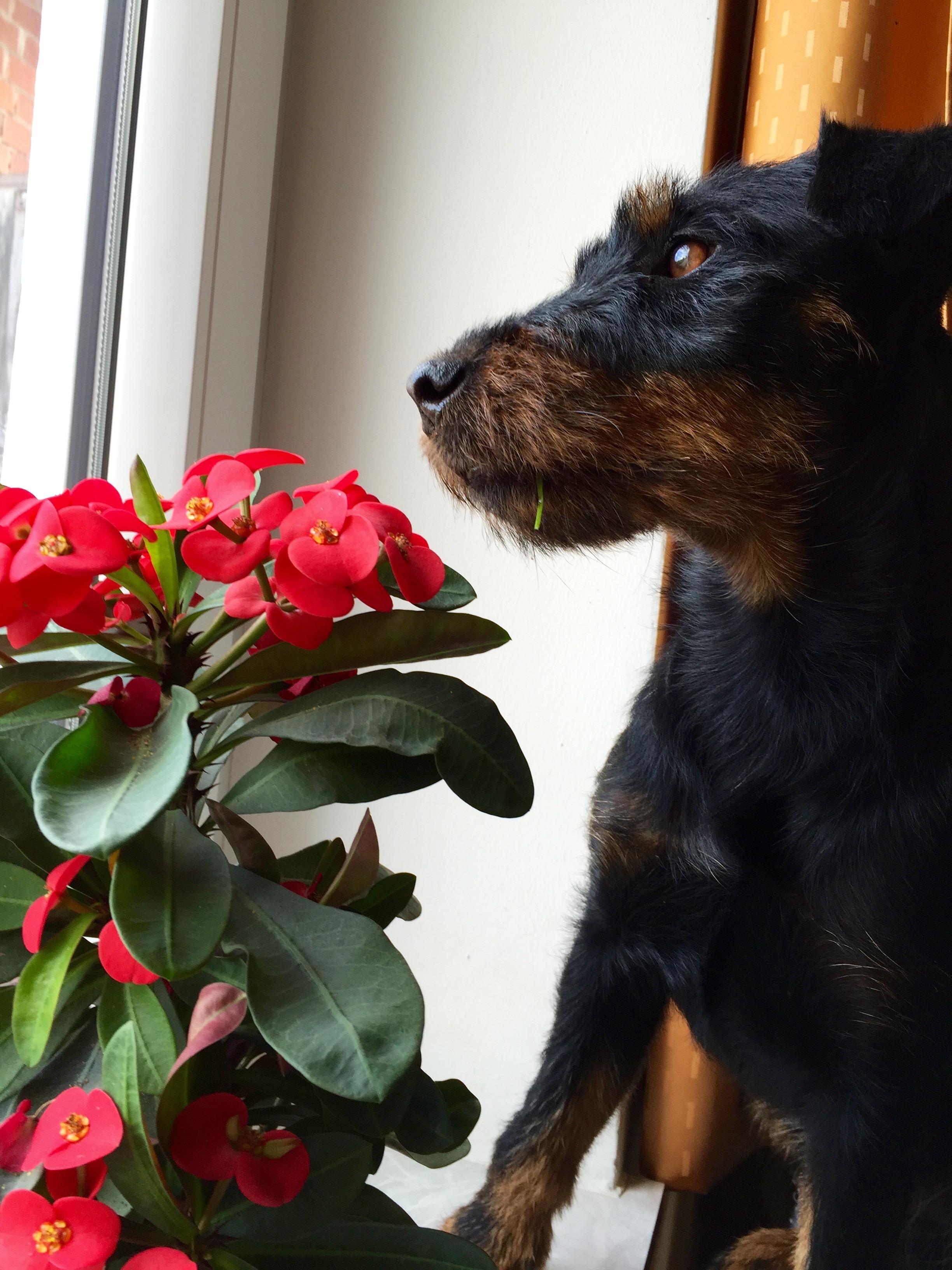 Home_dog_plant