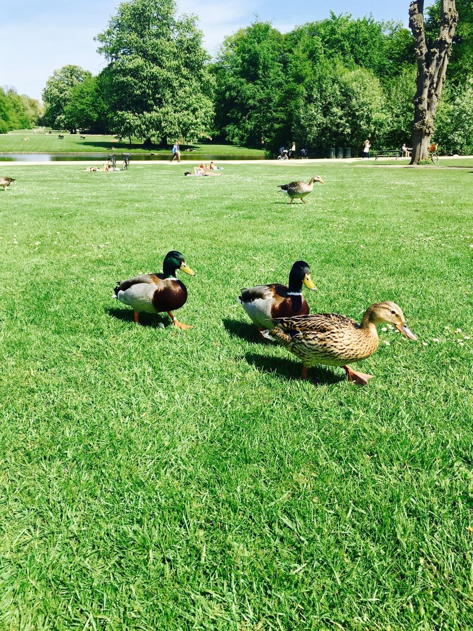 Park_birds_gang