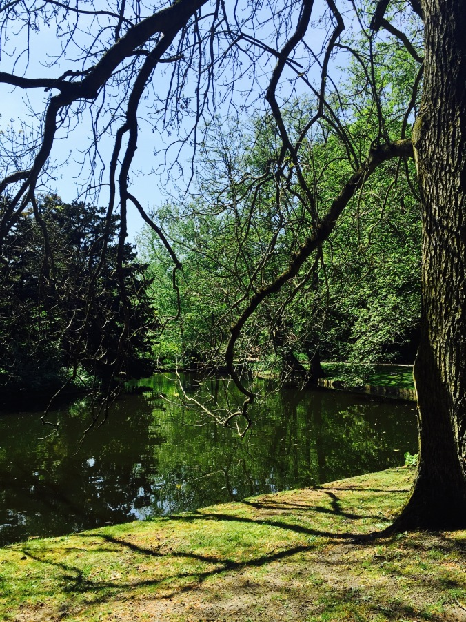 Park_tree