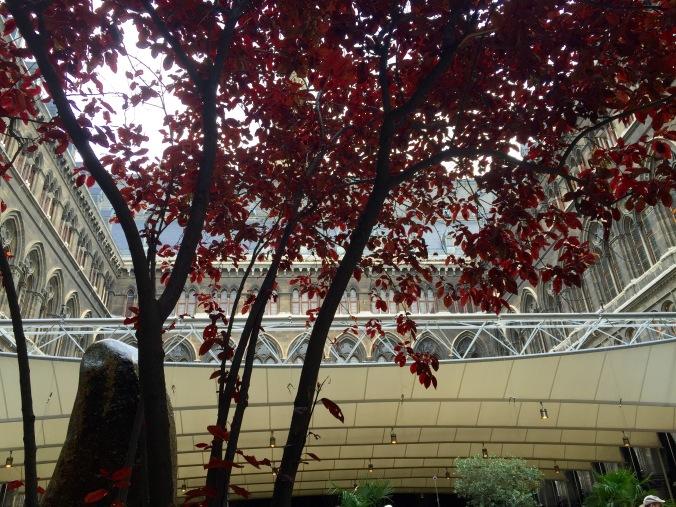 courtyard_tree_