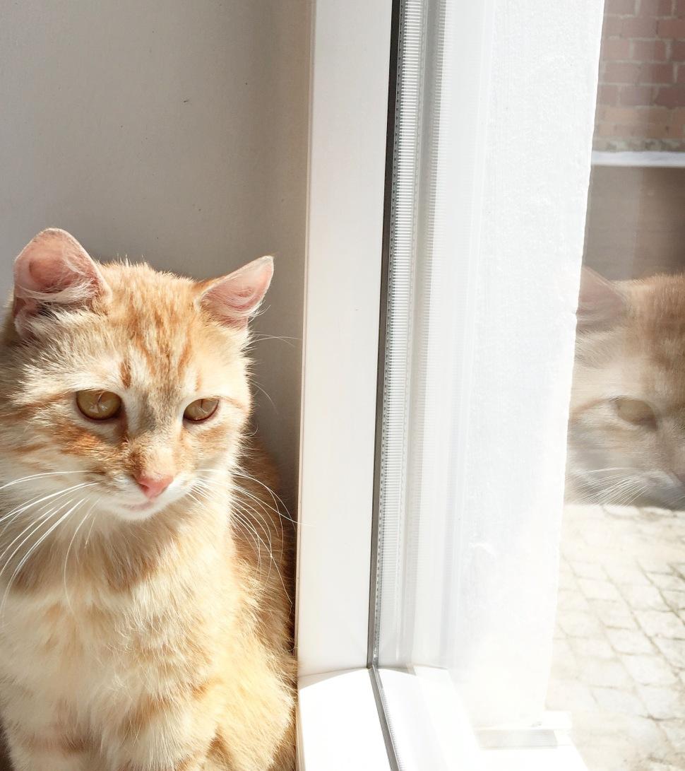 Home_cat