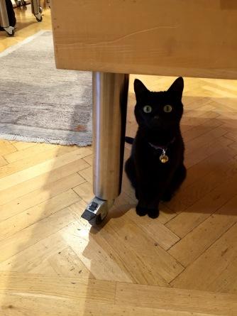 klagenfurt_bookstore_cat_black