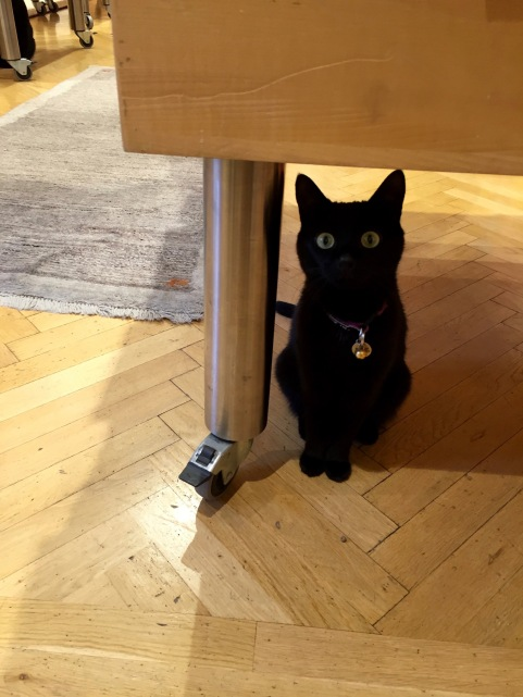 klagenfurt_bookstore_cat_black