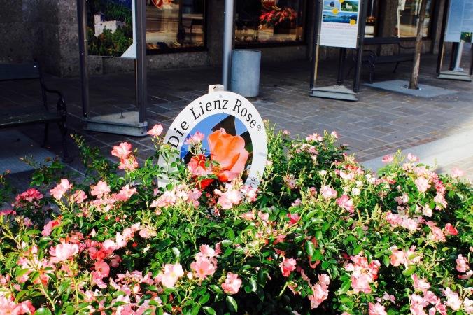 Lienz_rose
