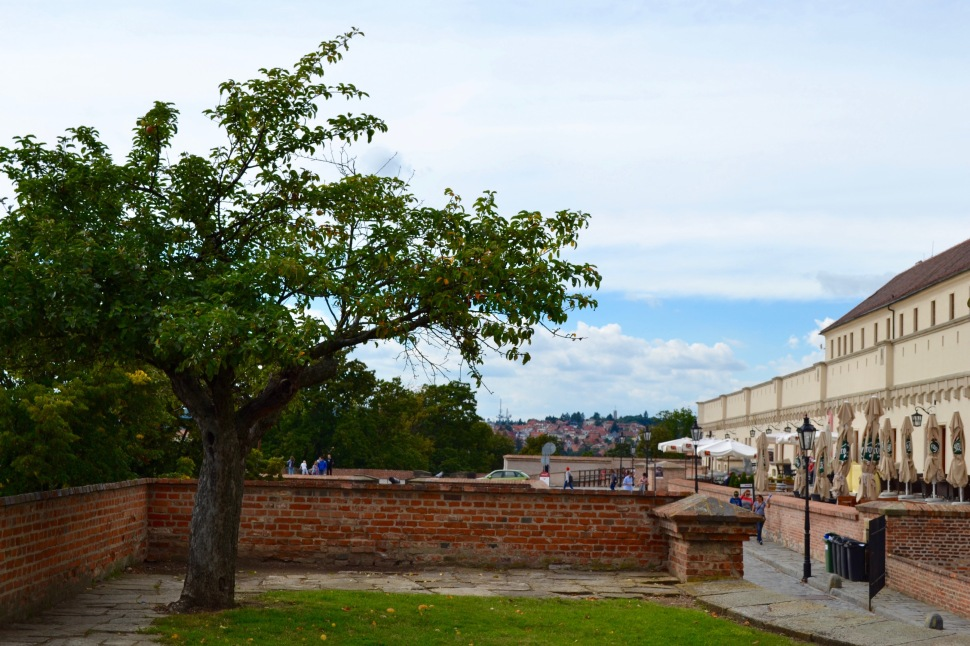 Brno_castle_tree