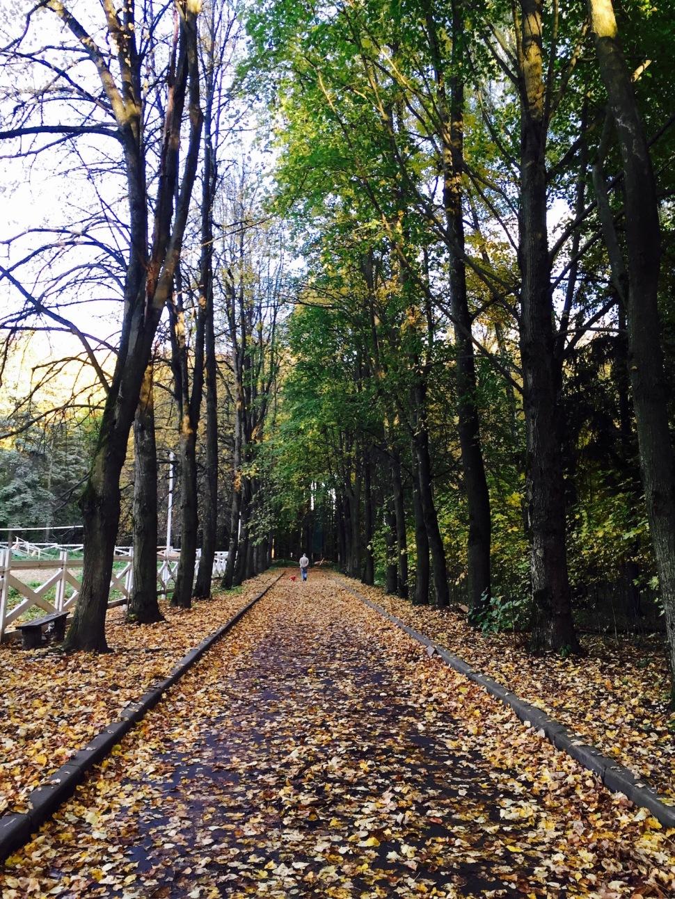 gorki_leninskiye_park_fall