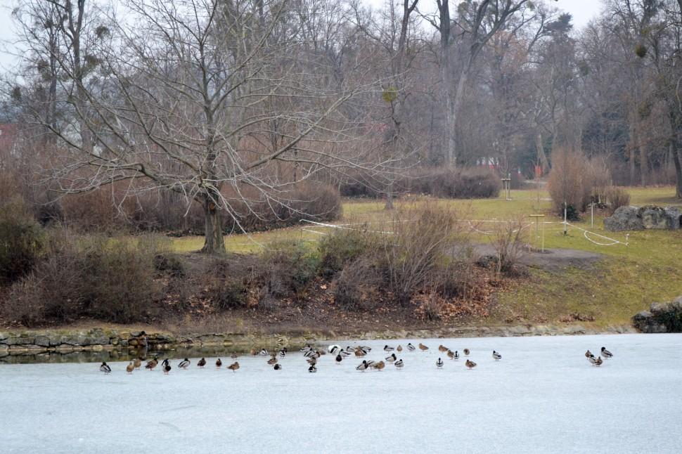 Burgenland_Eisenstadt_park_pond_frozen_animals