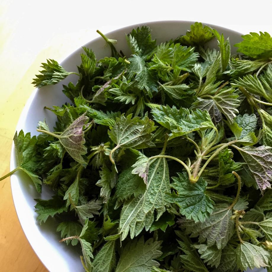 Food_spring_spinach-4.jpg