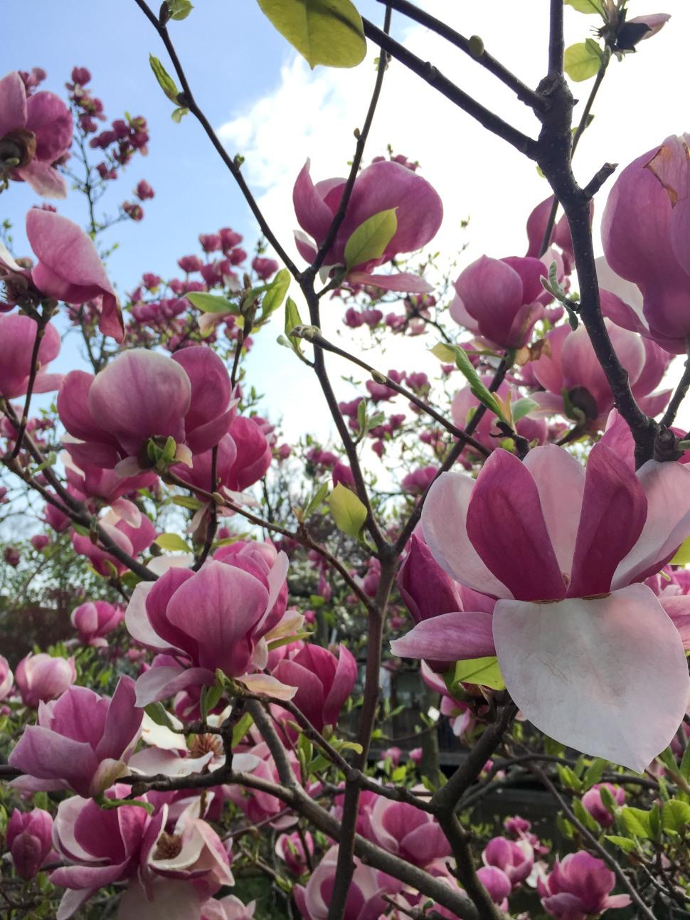 Setagayapark_vienna_pink_3
