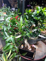 London_market_borough_plants