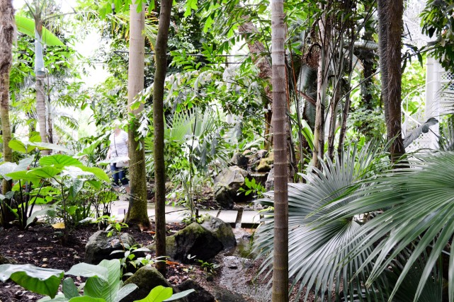 Copenhagen_Botanical Garden_palm house_inside_1