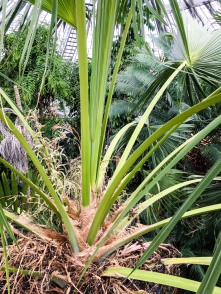 Copenhagen_Botanical Garden_palm house_inside_2