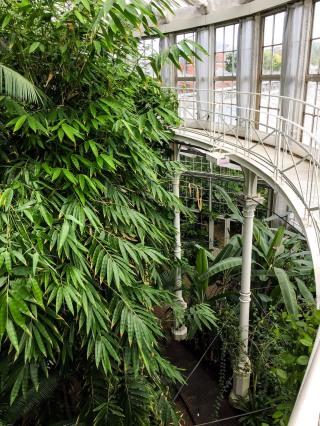 Copenhagen_Botanical Garden_palm house_inside_3