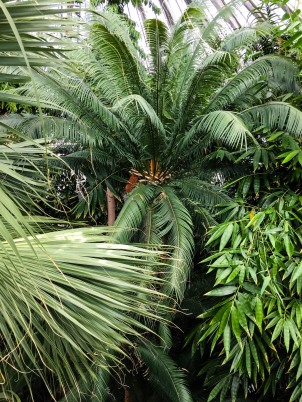 Copenhagen_Botanical Garden_palm house_inside_4