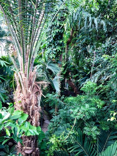 Copenhagen_Botanical Garden_palm house_inside_5