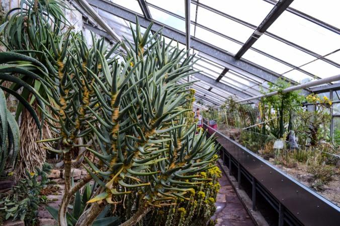Copenhagen_Botanical Garden_plants_cacti_1