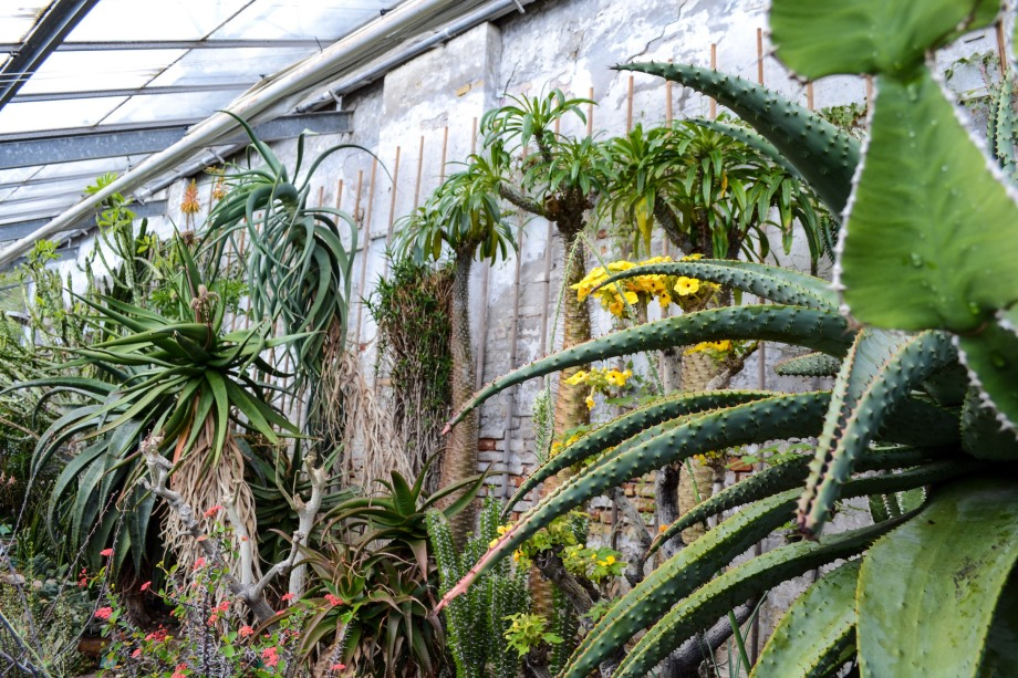 Copenhagen_Botanical Garden_plants_cacti_2