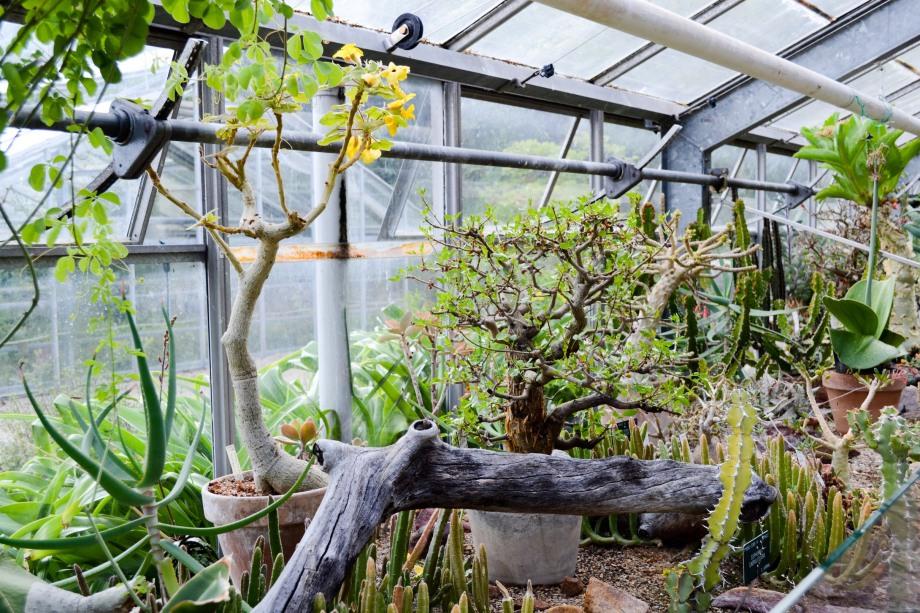 Copenhagen_Botanical Garden_plants_cacti_3
