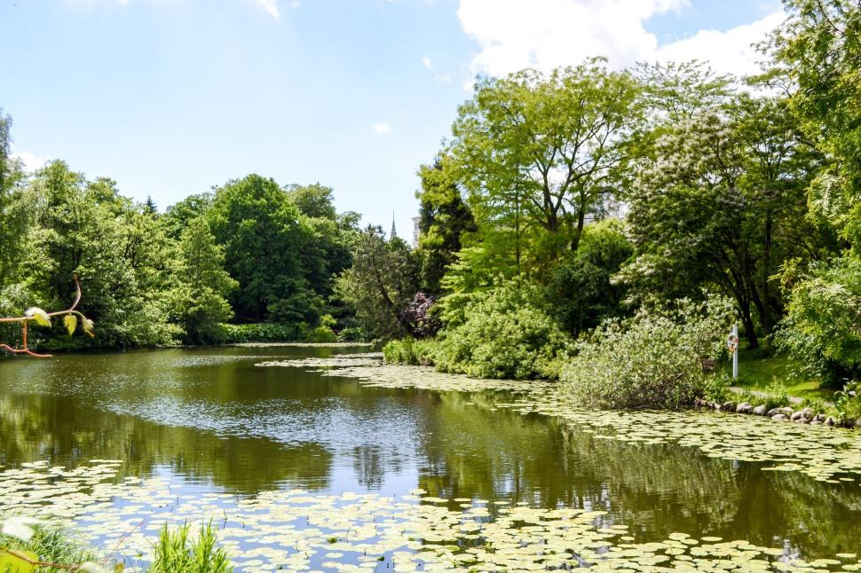 Copenhagen_Botanical Garden_pond_2