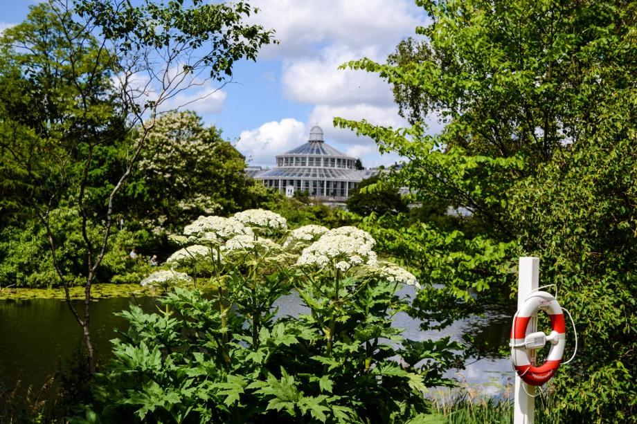 Copenhagen_Botanical Garden_pond_3