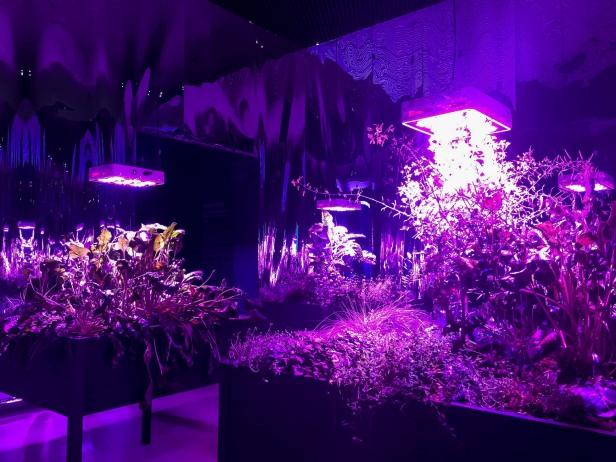 "MEG WEBSTER - ""Solar Grow Room"""