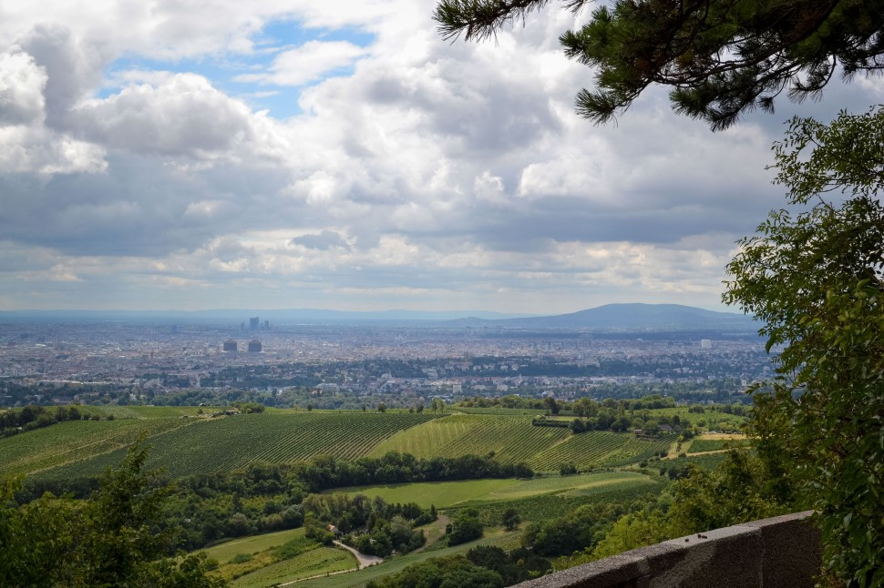 Vienna_hike_leopoldsberg_view_vineyards_city