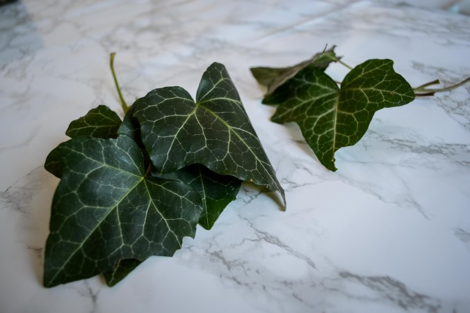 Autumn_Detergent_all-natural_ingredient_ivy
