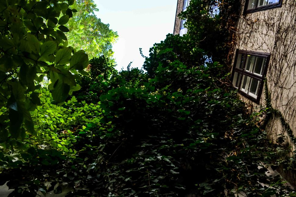Autumn_Detergent_all-natural_ivy_house