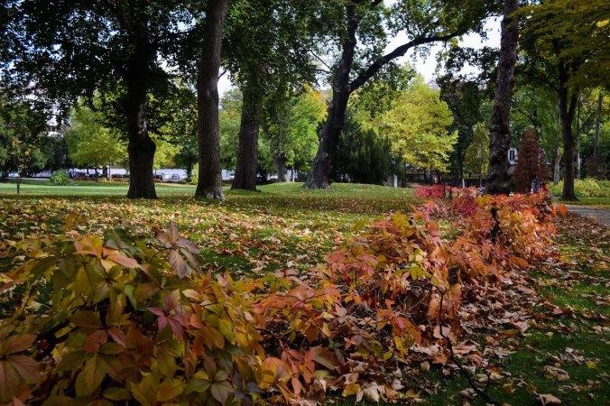 Autumn_vienna_liechtenstein-park_foliage_red