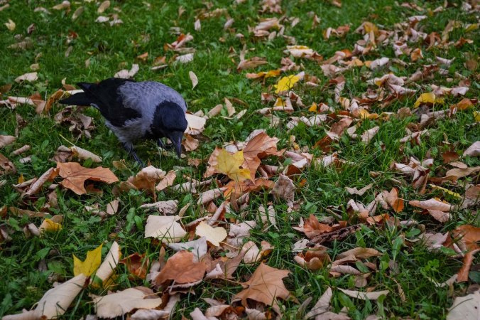 Autumn_vienna_liechtenstein-park_nature_bird