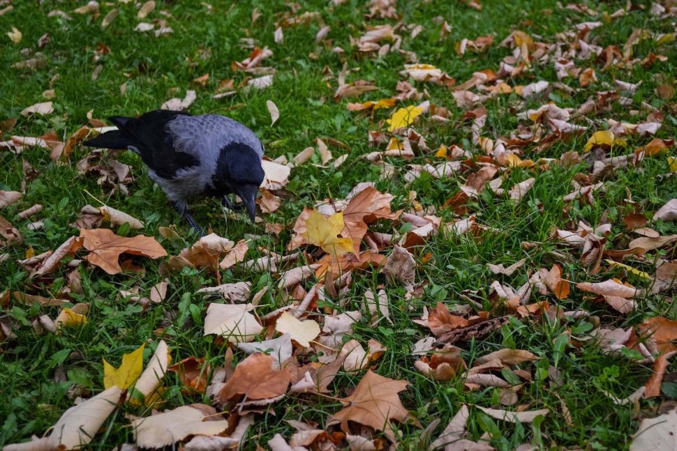 Autumn_vienna_liechtenstein-park_nature_bird