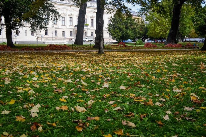 Autumn_vienna_liechtenstein-park_nature_grass