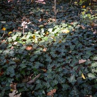Autumn_vienna_liechtenstein-park_nature_ivy