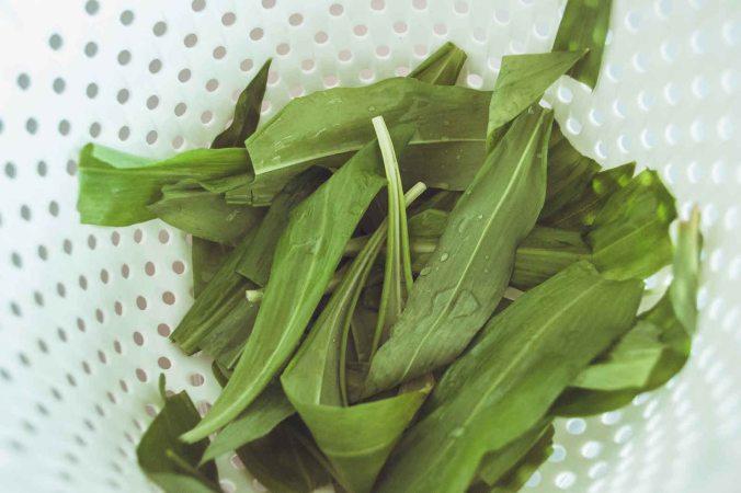 northernsunlight_recipe_wild-garlic_washed